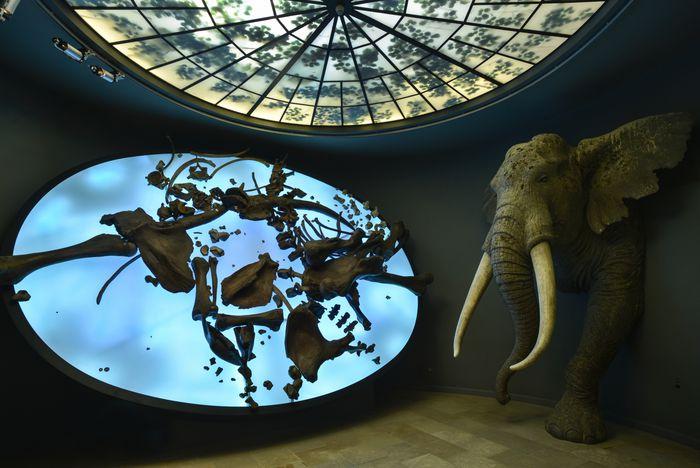 Die Knochen des geschlachteten Elefanten im See stehen einer lebensechten Rekonstruktion des Elephas antiquus gegenüber. © Landesamt für Denkmalpflege und Archäologie Sachsen-Anhalt, Juraj Lipták.