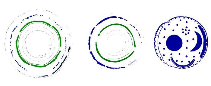 Grafische Darstellung der beiden Hengemonumente von Pömmelte und Schönebeck (beides Salzlandkreis) sowie der Himmelsscheibe von Nebra. © Landesamt für Denkmalpflege und Archäologie Sachsen-Anhalt.