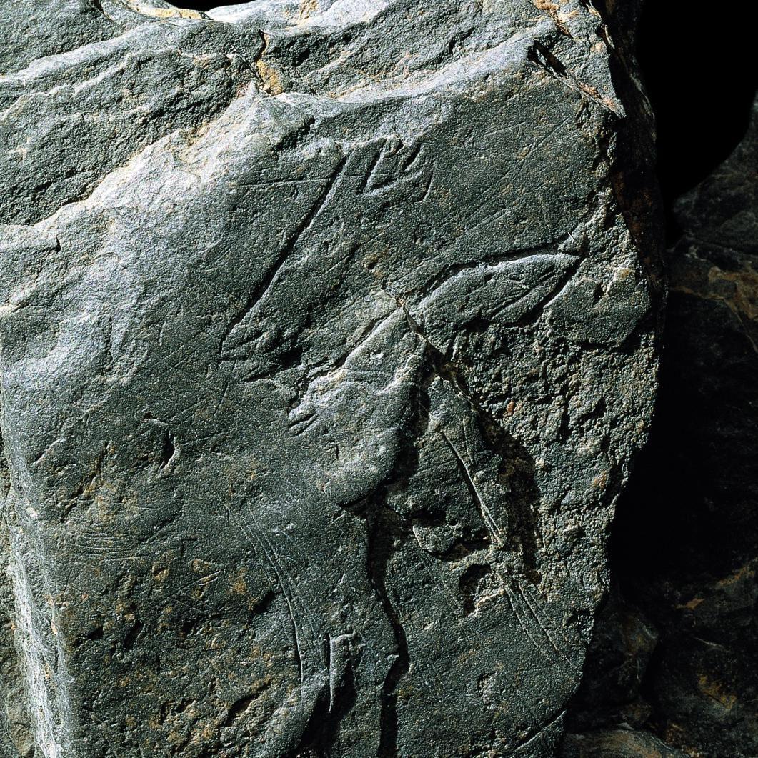 Eine Schieferplatte mit graviertem Pferdekopf. © Landesamt für Denkmalpflege und Archäologie Sachsen-Anhalt, Juraj Lipták.
