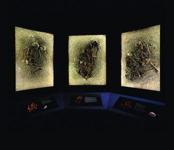 Die Gräber von Eulau im Landesmuseum für Vorgeschichte (ca. 2.600 v. Chr.). © Landesamt für Denkmalpflege und Archäologie Sachsen-Anhalt, Juraj Lipták.