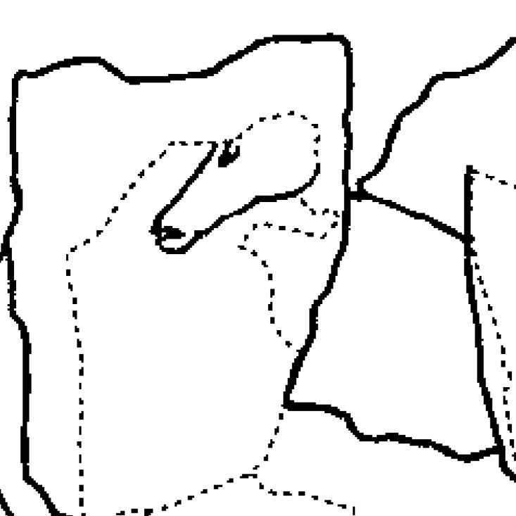 Umzeichnung einer Schieferplatte mit graviertem Pferdekopf. © Landesamt für Denkmalpflege und Archäologie Sachsen-Anhalt, Karol Schauer.