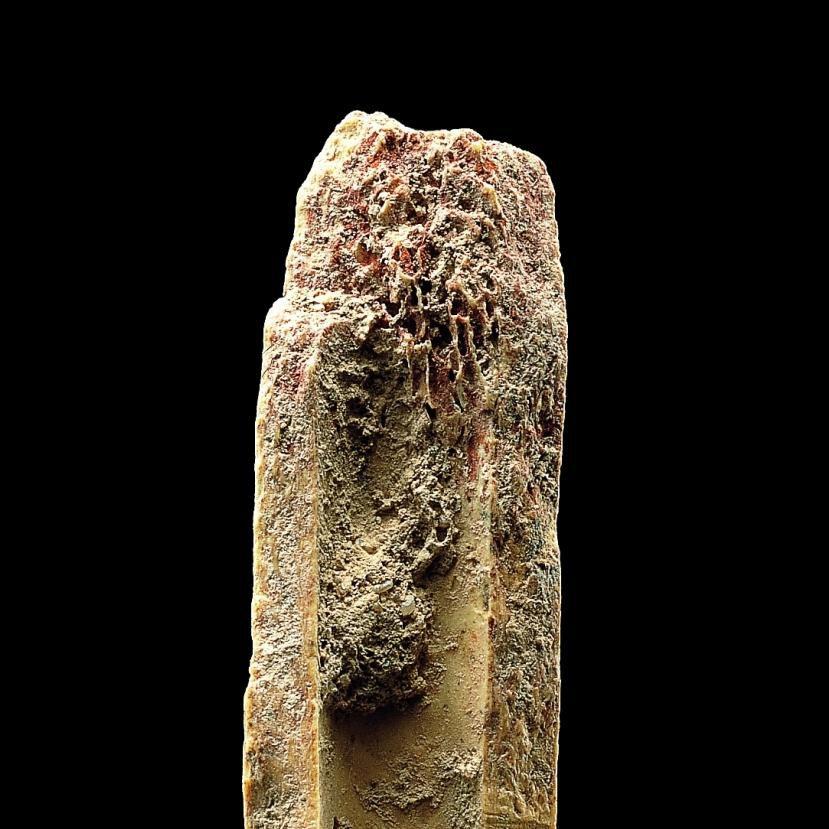 In der Detailansicht der Spitze des Knochens ist deutlich der erhaltene Rötel erkennbar. © Landesamt für Denkmalpflege und Archäologie Sachsen-Anhalt, Juraj Lipták.