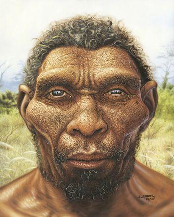Die ältesten menschlichen Überreste, die in Mitteldeutschland gefunden wurden, stammen vom Homo erectus (der ›aufgerichtete‹ Mensch). © Landesamt für Denkmalpflege und Archäologie Sachsen-Anhalt, Karol Schauer.