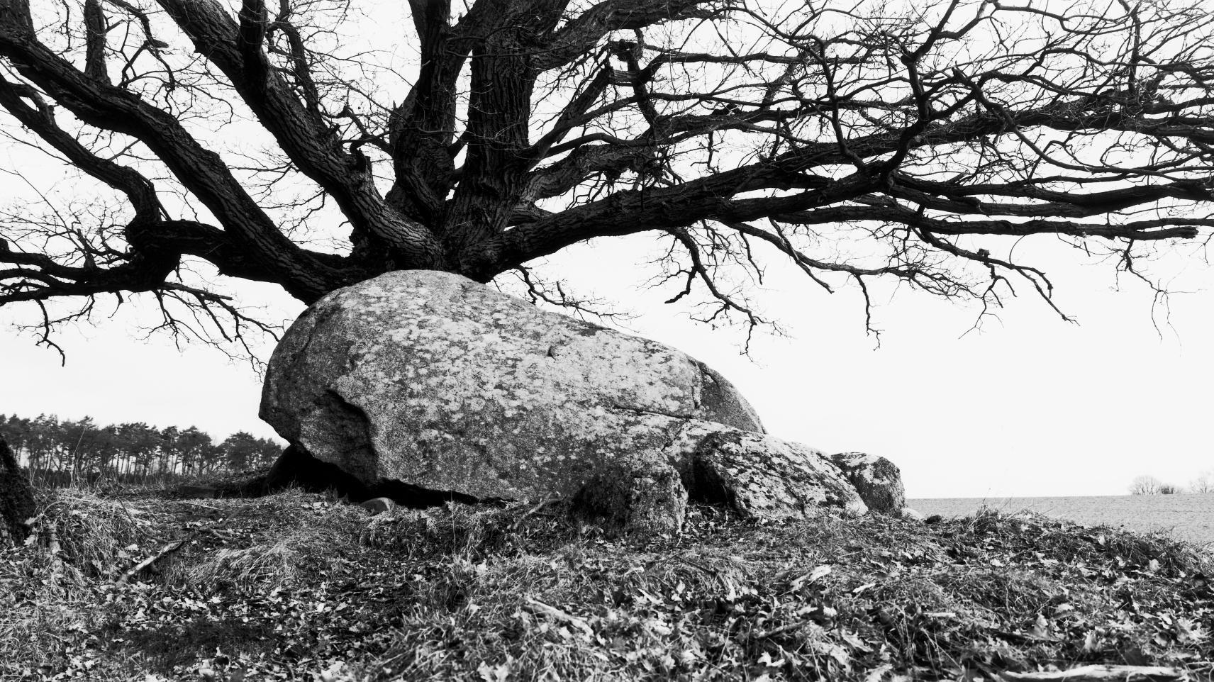 Die Großdolmen von Lüdelsen, Fundplatz 1, im Altmarkkreis Salzwedel. © Landesamt für Denkmalpflege und Archäologie Sachsen-Anhalt, Juraj Lipták.